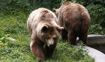 Laciana, zona habitual de osos