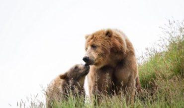 Los osos en Laciana siguen apareciendo